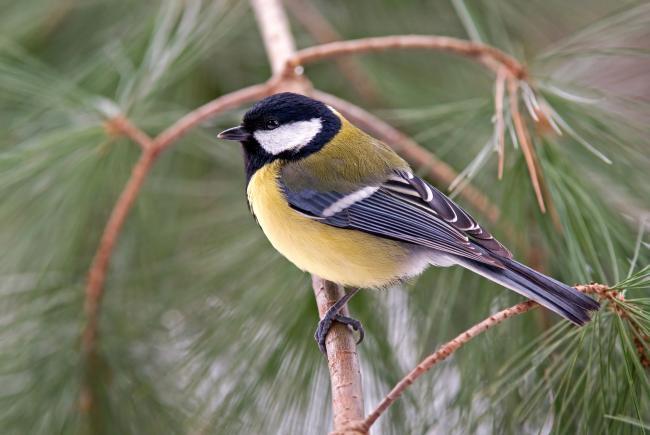 Genieten van de vele vogels