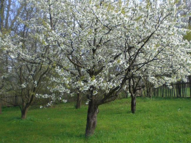 Boomgaard in de tuin