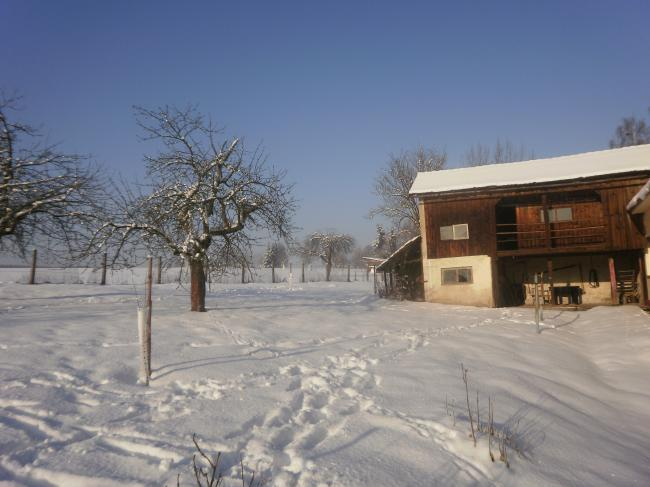tuin in winter