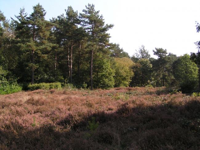 Heidevelden