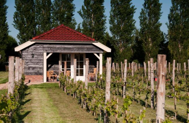 Huisje Roggenkamp - Wijngaard Vakantiehuis veluwe, vakantiehuis, veluwe, vakantiepark, nieuw grapendaal, appelhof, Roggenkamp