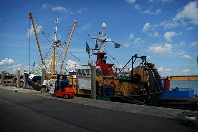 Vakantiewoning Limosa - haven van Den Oever
