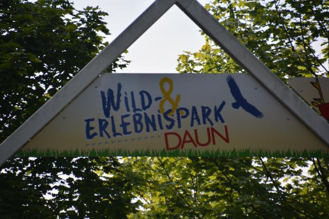 Wild Park Daun