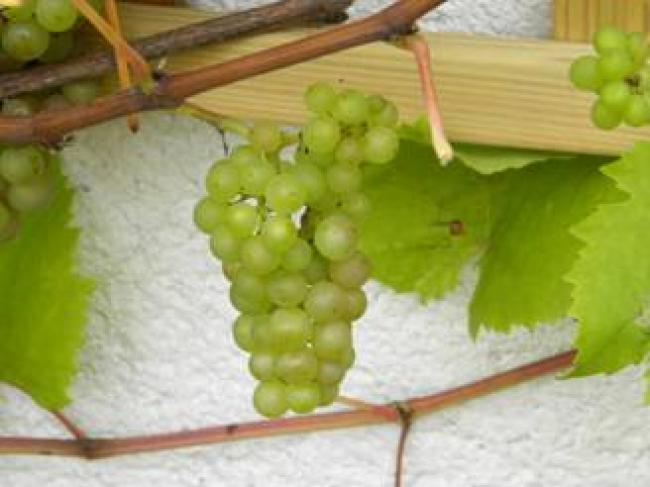 Vers fruit in de tuin