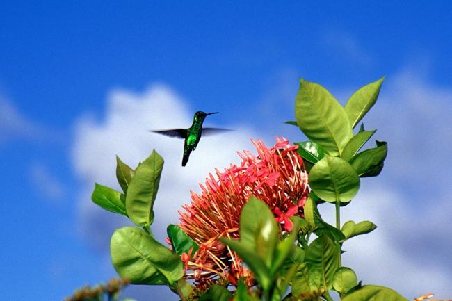 Kolibri in de tuin