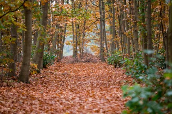 Bos bij Landgoed de Biestheuvel