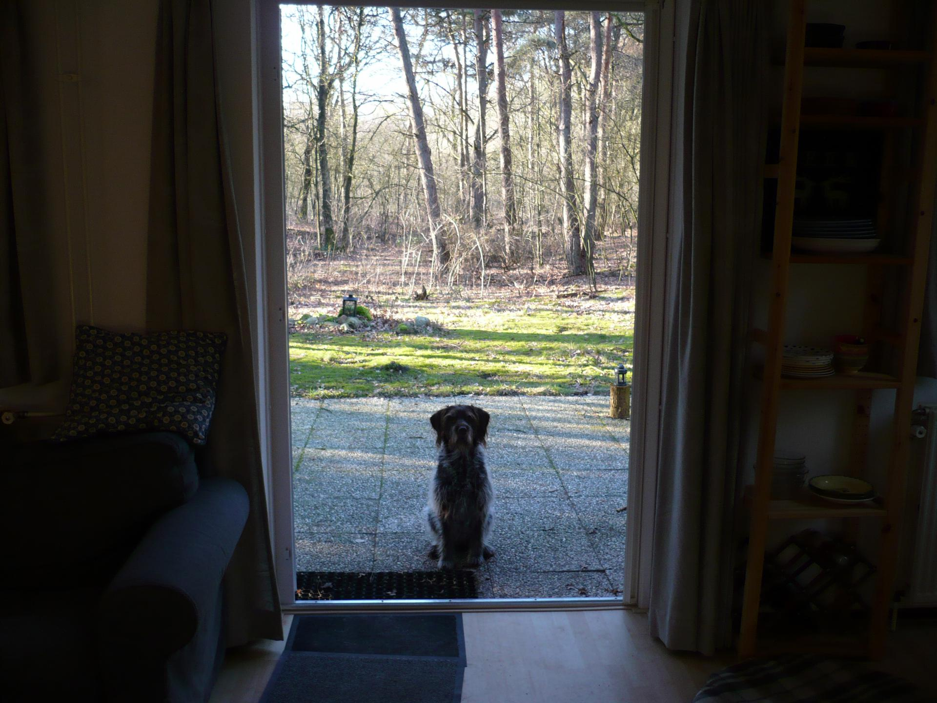 bosvilla 153 watch the dog