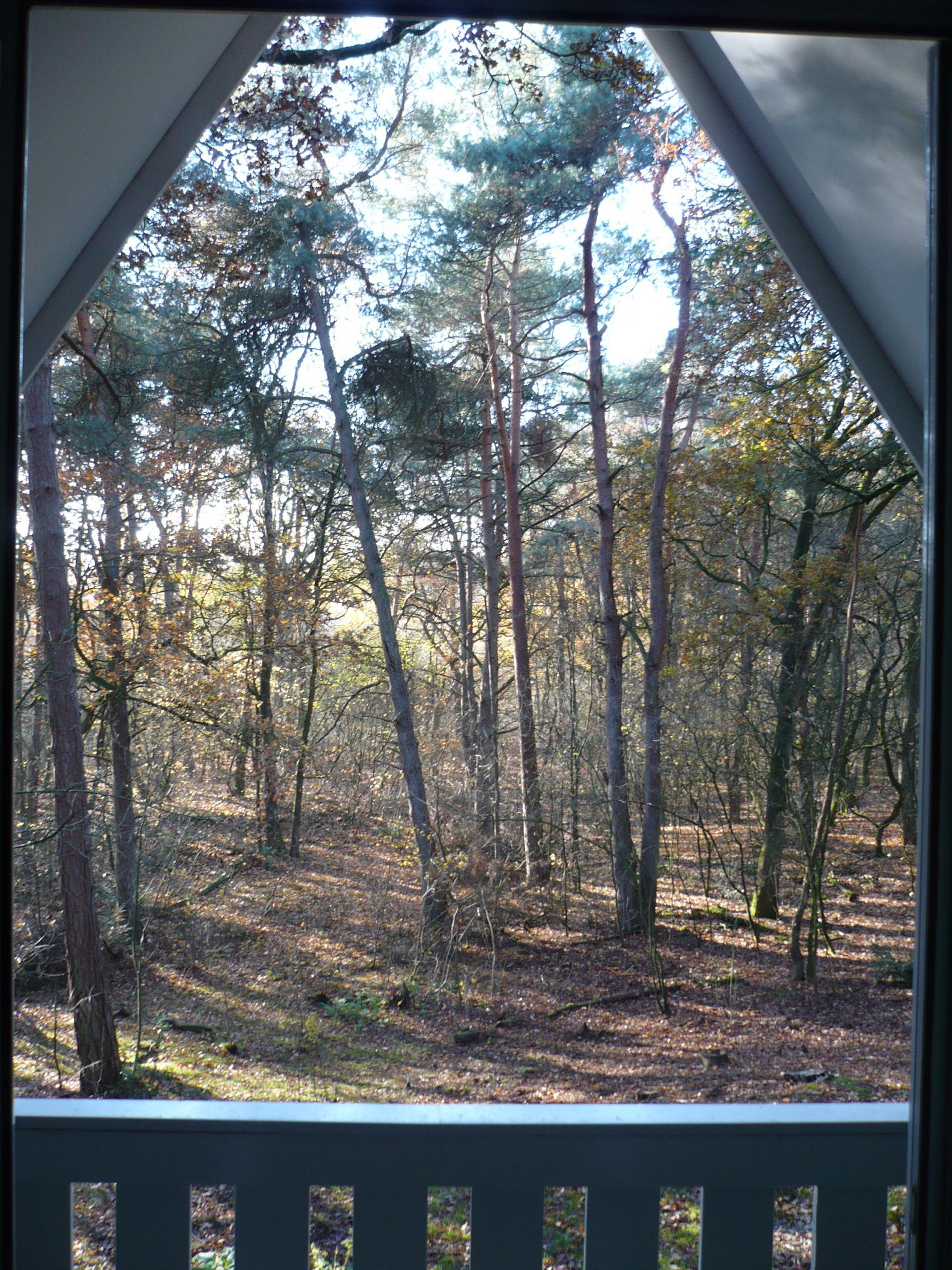bosvilla 153 blik in het bos