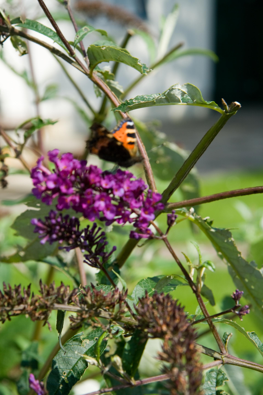 wierde vlinder