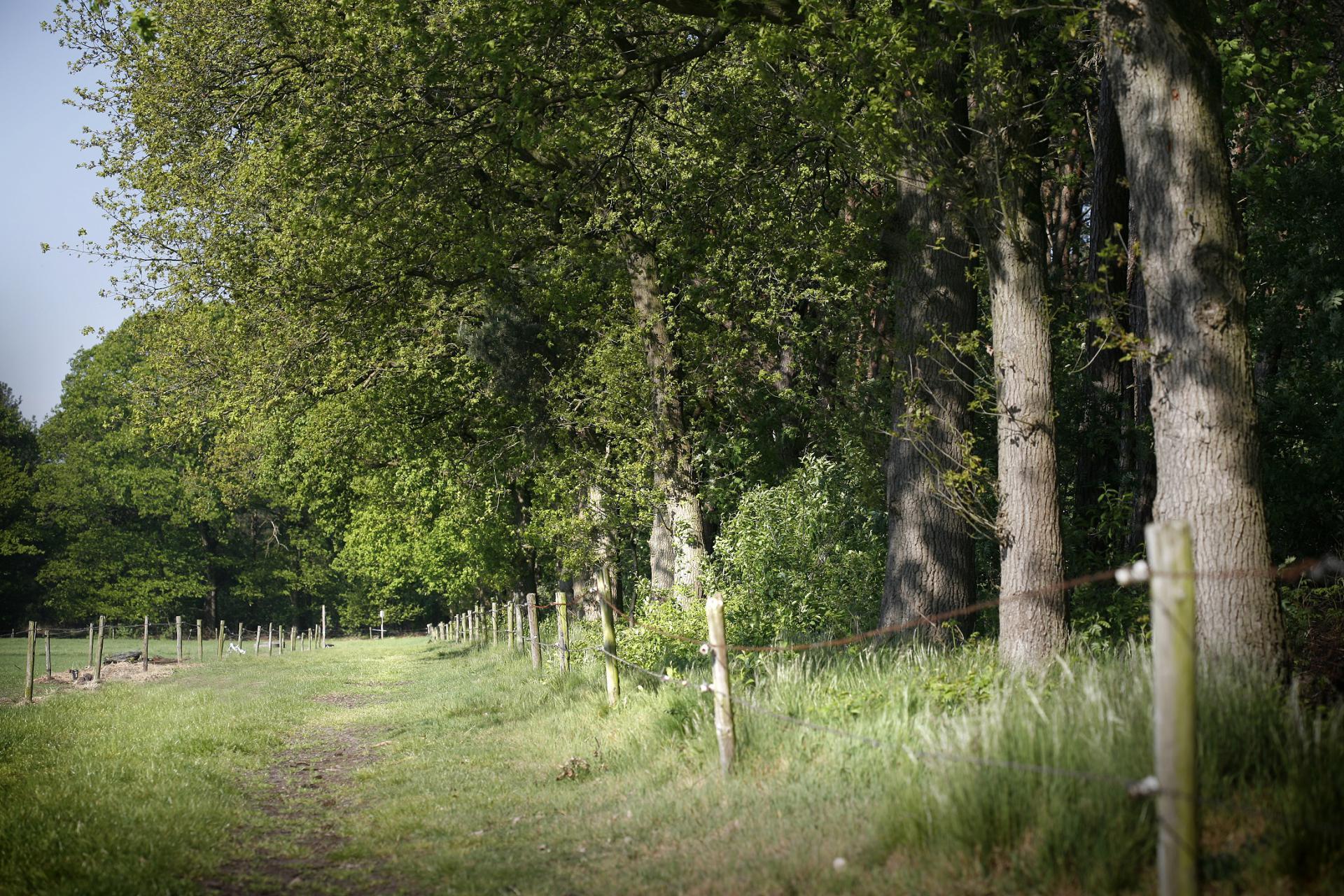 De Buitenhorst Schaijk - De Ouwe Stal - Bos